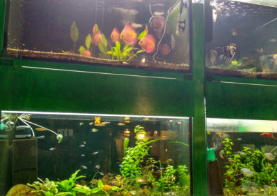 Hodowla ryb akwariowych (1)