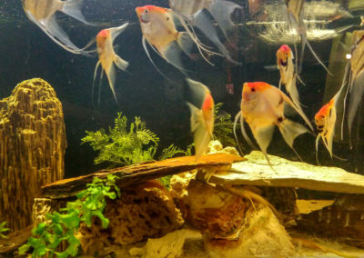 Hodowla ryb akwariowych (3)