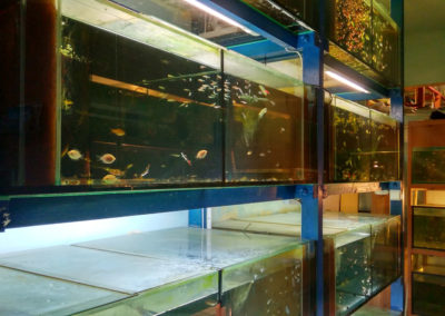 Hodowla ryb akwariowych (7)